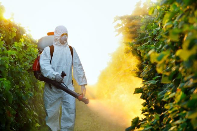 Un uomo spruzza pesticidi sulle piante coltivate
