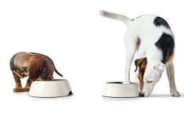 Cani voraci le migliori ciotole