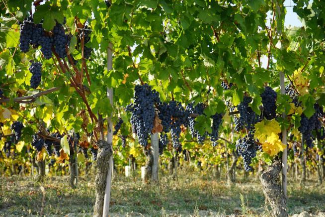 Il Piemonte e la tradizione del vino