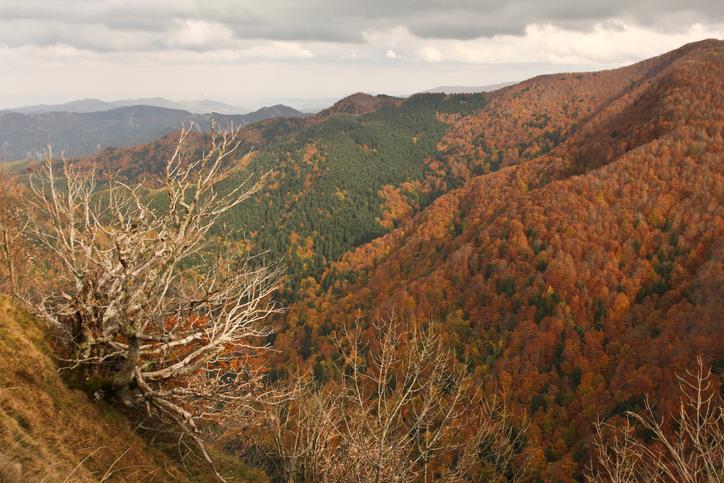 I colori delle Foreste Casentinesi visti dall'alto.