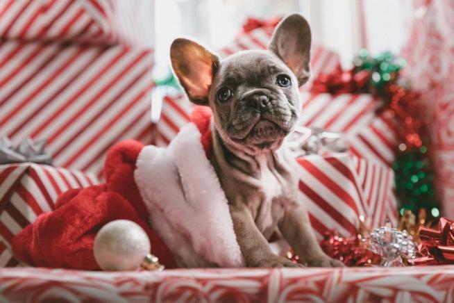 Cappotti Di Natale Per Cane