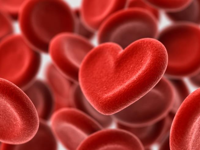 Globuli sangue a forma di cuore