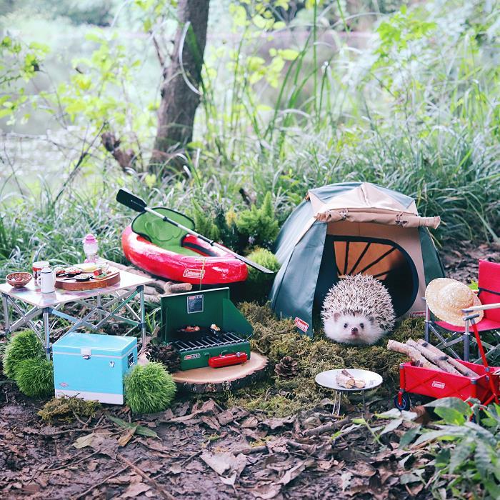 Il riccio Azuki i con tutto l'equipaggiamento da campeggio