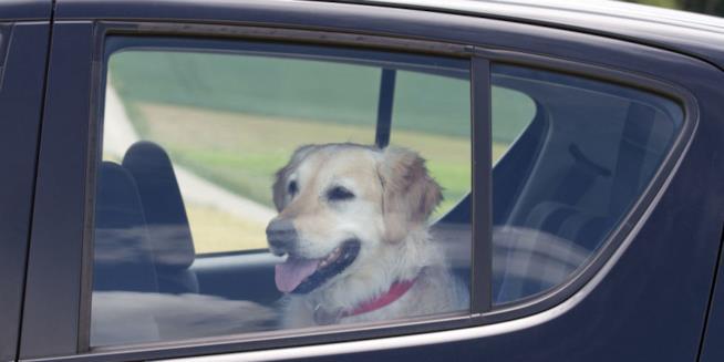 Un cane nell'abitacolo di un'automobile