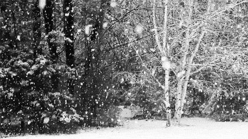 Una nevicata in GIF