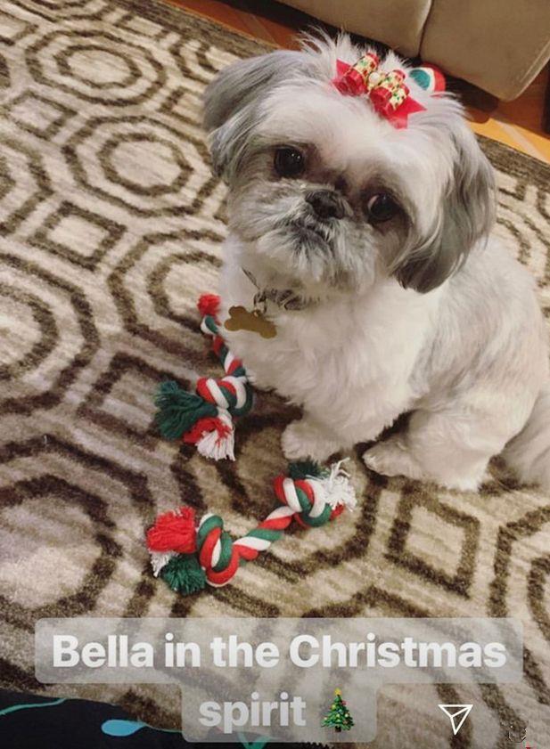 Bella, uno dei cinque cani di Demi Lovato