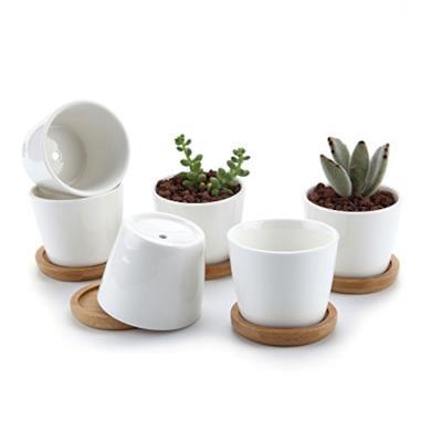 Vasi per piante grasse