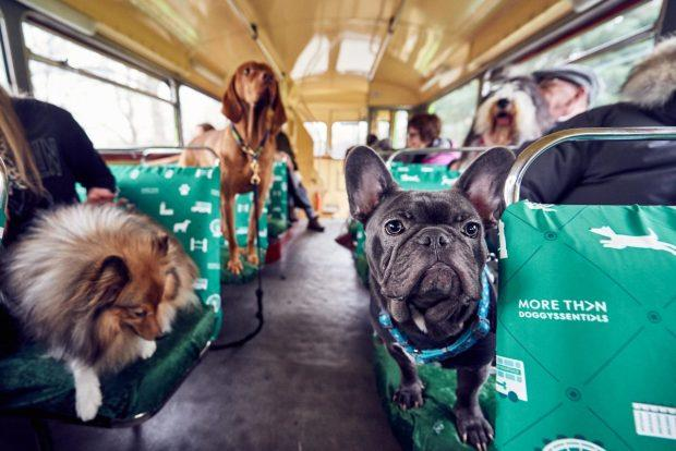 Alcuni passeggeri a 4 zampe sul bus per cani di Londra