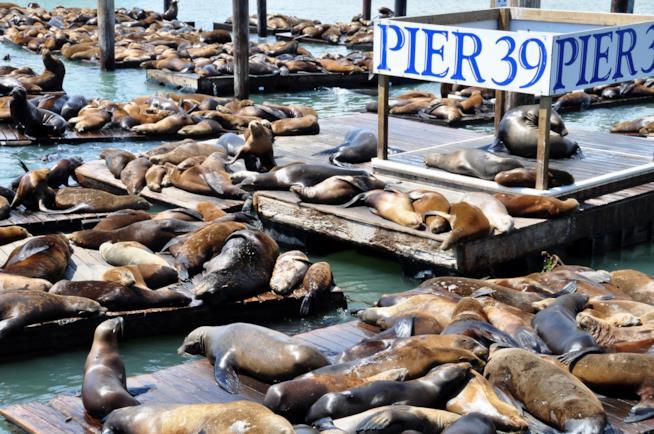 San Francisco cioccolato, leoni marini e laboratori creativi