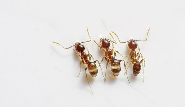 Una guida per individuare i rimedi più efficaci contro le formiche che ci sono in casa