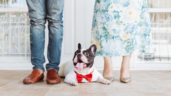 un uomo e una donna inquadrati dal bustoin giù con un cane nel mezzo con il frac rosso