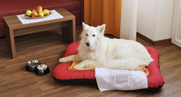 Un cane su un cuscino rosso.