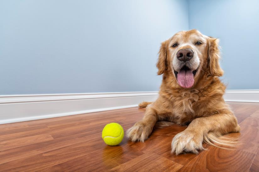 Un cane sdraiato con una palla da tennis