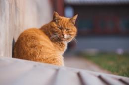 Un tipo di gatto.