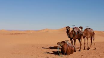 """Il deserto marocchino, da scoprire a """"bordo"""" di dromedari"""