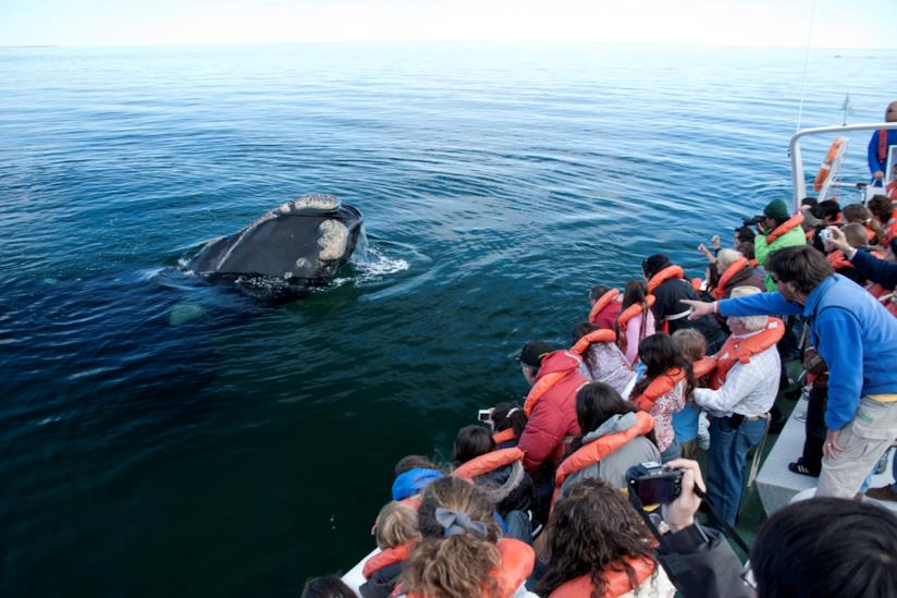 whale-watching-Argentina