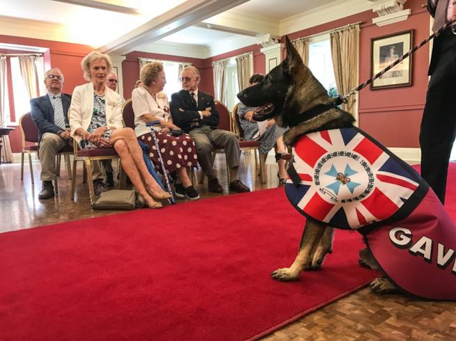 Il cane Gavel nella Residenza del Governatore