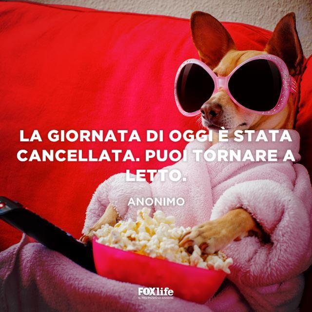 Cagnolino seduto sul divano con i popcorn