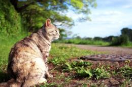 Un gatto seduto al lato di una strada di campagna