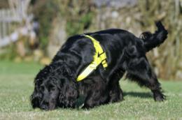 Un cane pet detective fiuta le tracce