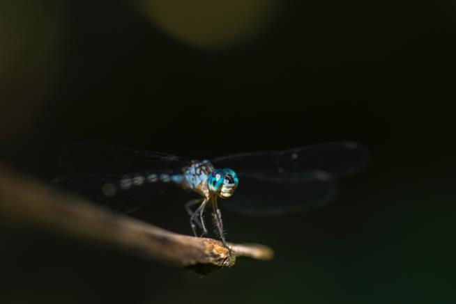 Amaca con zanzariera: tieni lontani gli insetti durante il campeggio