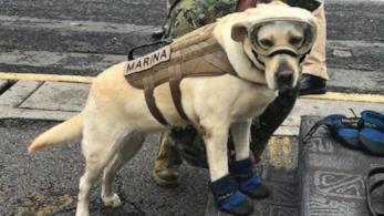 Il cane Frida che ha aiutato i soccorritori in Messico durante il terremoto