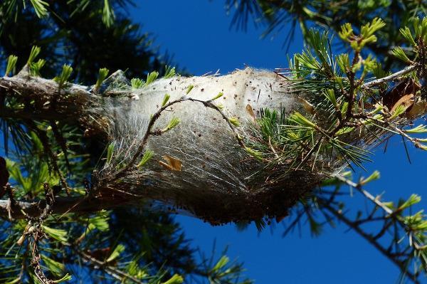 Un nido su un albero