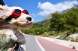 Un cane in viaggio affacciato al finestrino