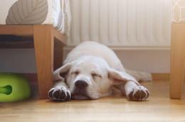 Migliore ciotola per cani di taglia grossa
