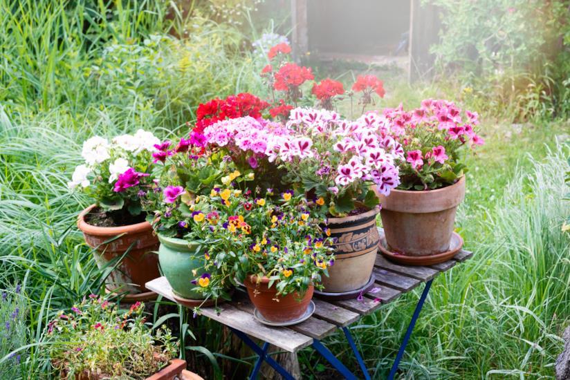 Vasi di piante con sottovasi