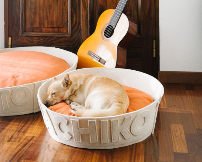 L'immagine di un cane che dorme tranquillo nella sua cuccia