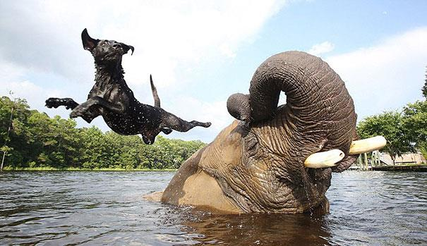Un cane ed un elefante giocano