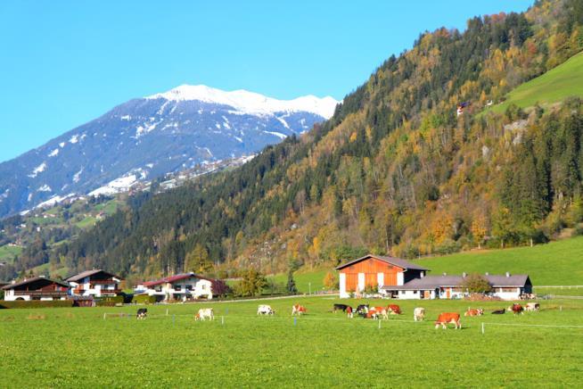vista su un prato verde, le montagne innevate sullo sfondo, qualche casa e delle mucche