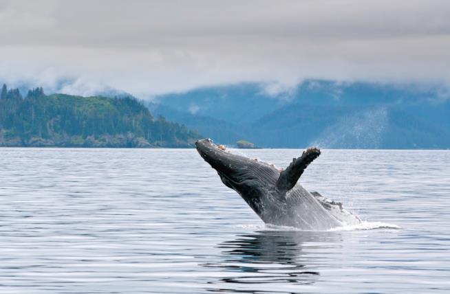 Biodiversità in Alaska