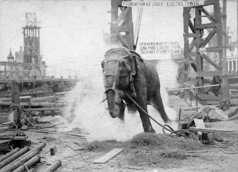 Una scena di Electrocuting an Elephant