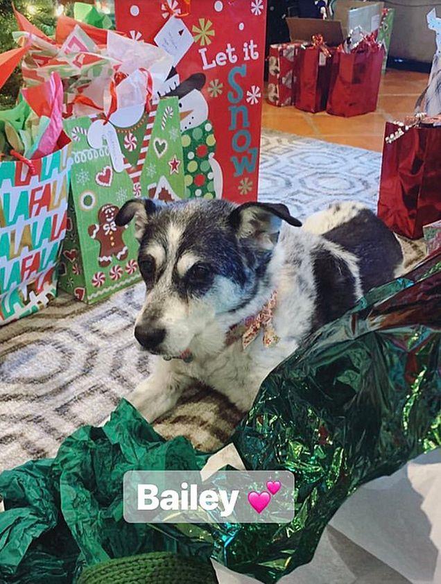 Bailey, uno dei cani di Demi Lovato, insieme ai regali di Natale