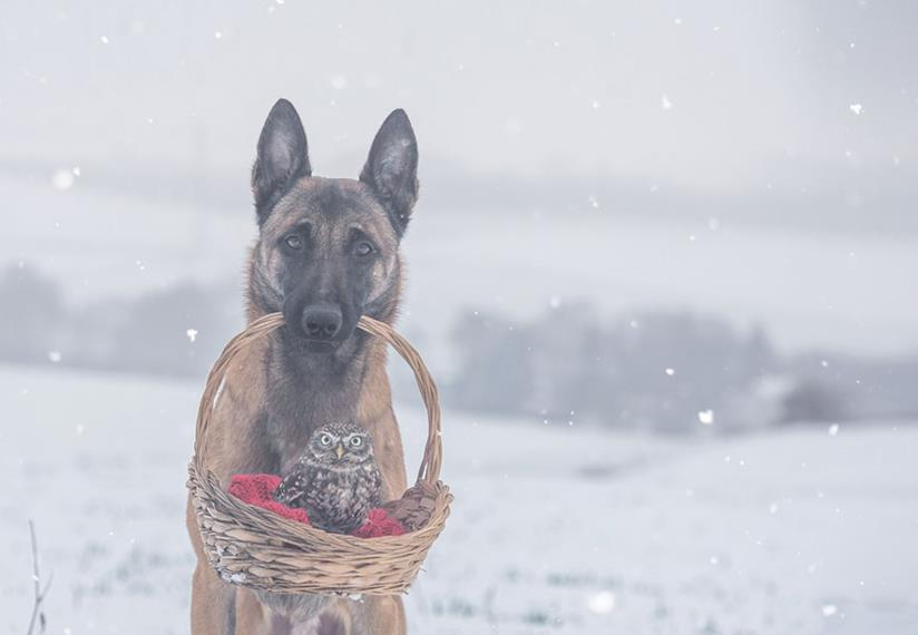 Un cane porta a spasso un gufo