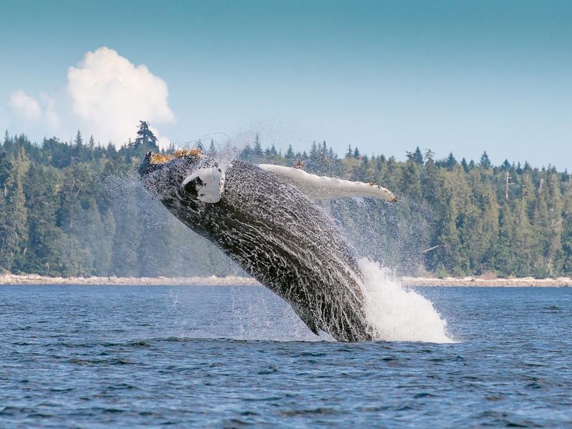 Terranova Canada balene