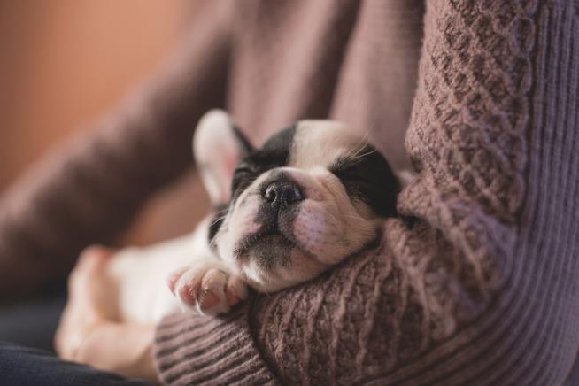 Un cane che dorme tra le braccia della padrona.