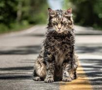 Il gatto di Cimitero Vivente del remake