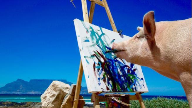 Pigcasso mentre dipinge su una tela