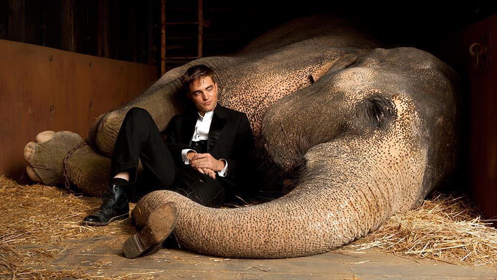 Come Lacqua Per Gli Elefanti Trama E Significato Del Titolo Di