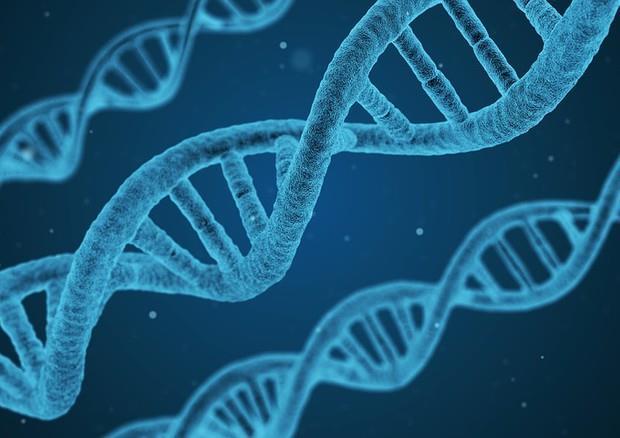 Alcune doppie eliche di DNA situate in parallelo l'una rispetto all'altra