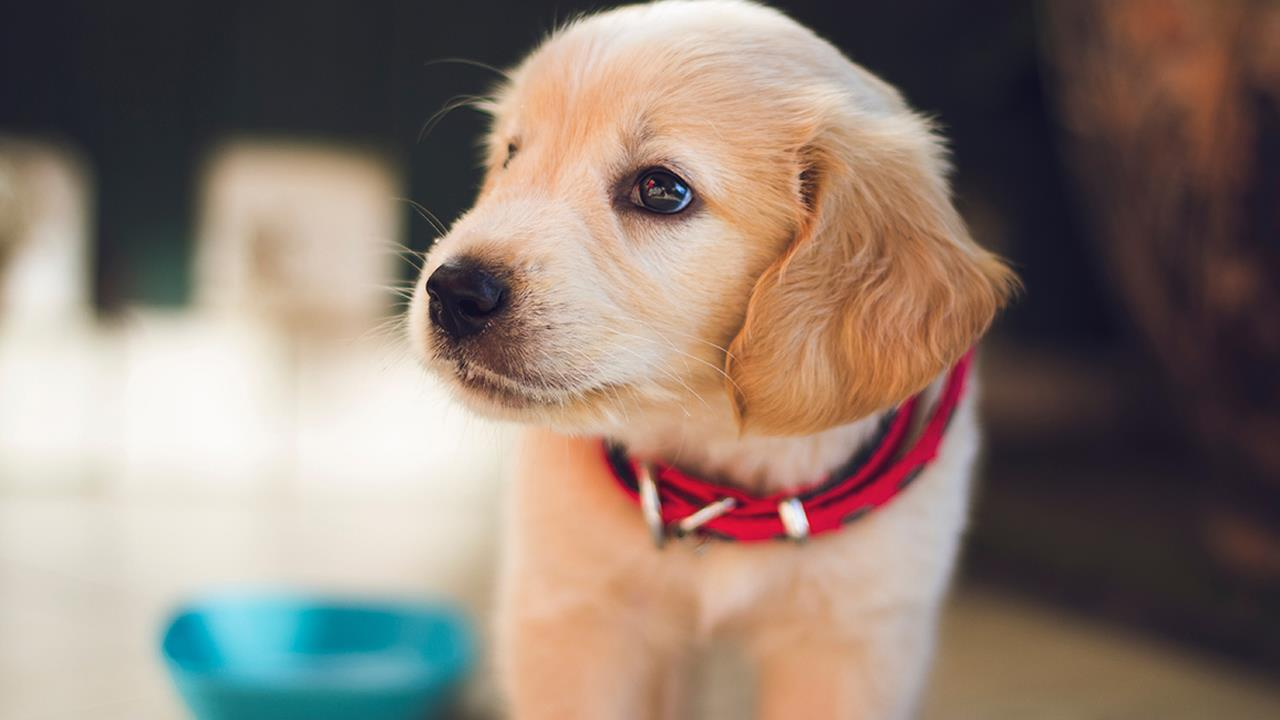 Clonare il cucciolo di casa? È possibile, a un costo da 35mi