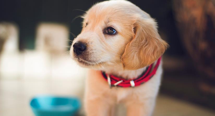 Un adorabile cucciolo di cane