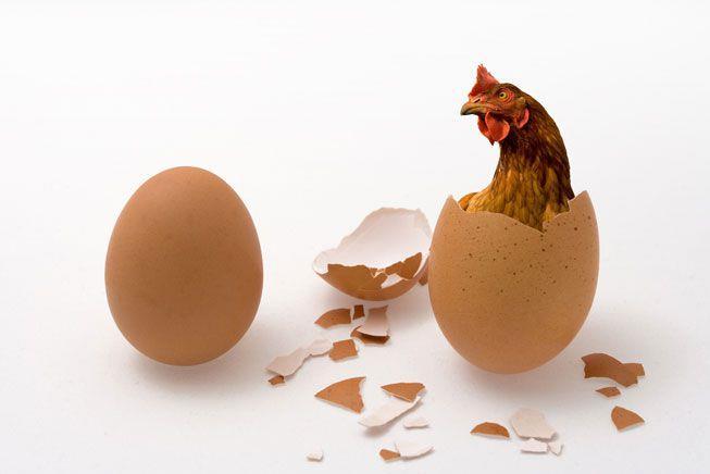 Un uovo a sinistra, una gallina che sbuca da un uovo a destra