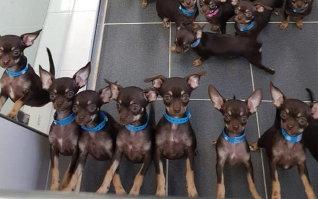 Milly e i suoi cloni