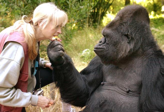Koko e Penny Patterson