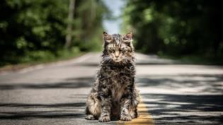 Leo, il gatto protagonista di Pet Sematary