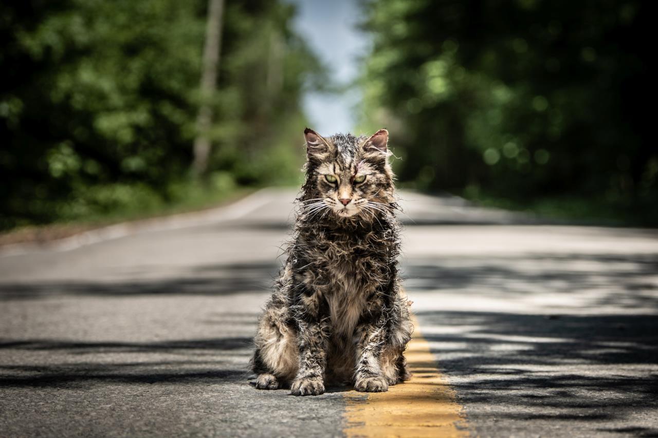 Il gatto tornato in vita in Pet Sematary